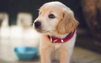 5 FAQs Regarding DCM and Pet Food