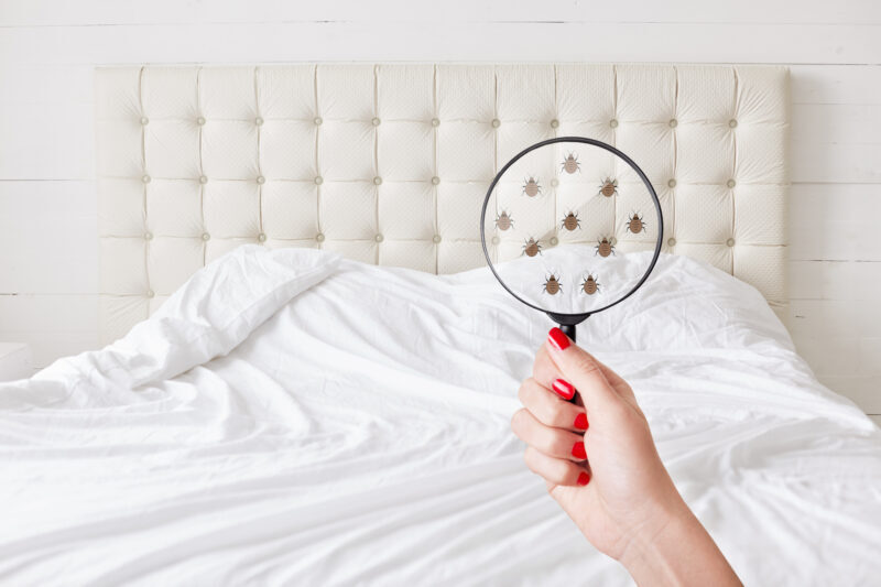 If your home has bed bugs, you need to know as early as possible. This guide explains the first signs of bed bugs to watch out for.