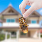 Wondering if home pest control services are really worth it? Check out our article to see the real benefits that come with it!