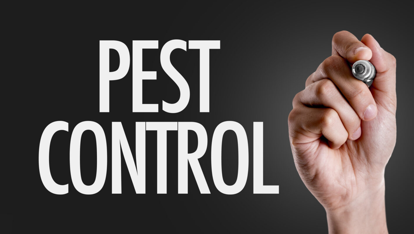 Pests can be devastating to your home, so what can you do? This guide explains 8 pest control tips every homeowner should know.