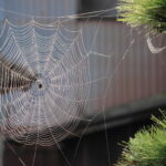 Some signs of a spider infestation are more obvious than others. Look out for these signs of an infestation and act fast to get rid of them.