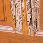 Nobody wants to deal with a termite infestation. By looking out for these termite problems, you're able to contact a professional before things get out of hand.