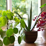 While every plant has its own unique needs, learning the basic house plant care methods can guide you toward a greener thumb. Read here to learn more!