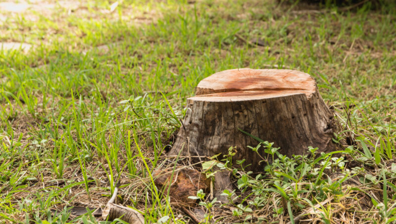 Got the dream yard in mind? But what do you do about that pesky stump in the way? Learn how to get rid of a stump easily here.