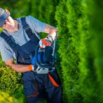 Landscape maintenance services range from lawn care to property management. Check out some of the most important of these services for any setting.